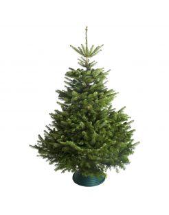 Hm Nordmann Gezaagd - Kerstboom - 200-250 cm Rood