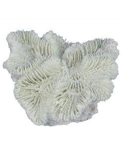 Aqua Della Fungia Koraal - Aquarium - Ornament - 12x12x5 cm Wit
