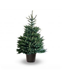 Hm Omorica Pot - Kerstboom - 100-150 cm Geel Streep