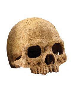 Exo Terra Schuilplaats Primate Skull - Ornamenten - 17x13.5x11.5 cm