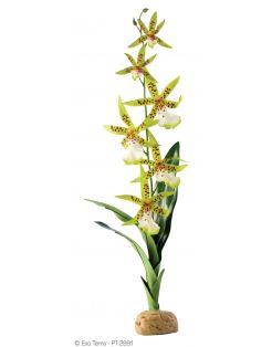 Exo Terra Rainforest Plant Spider Orchid - Kunstplanten - per stuk