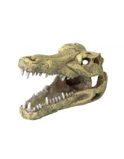 Aqua Della Decor Schedel Krokodil S - Aquarium - Ornament