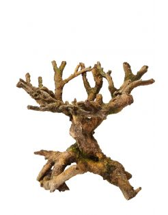 Aqua Della Decor Bonsai Bruin - Aquarium - Ornament