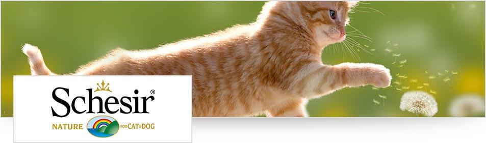 Schesir logo kat