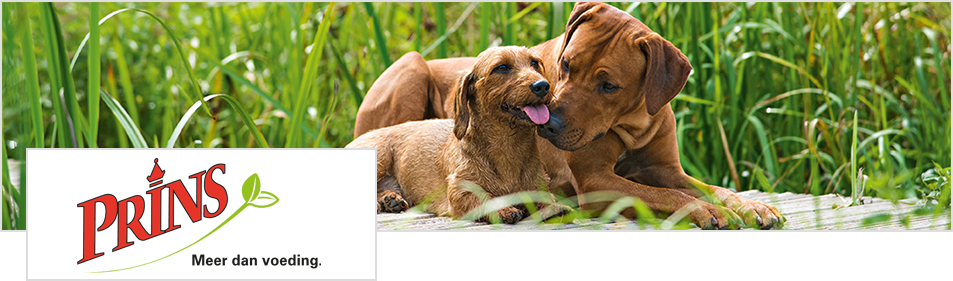 volwassen hond en pup