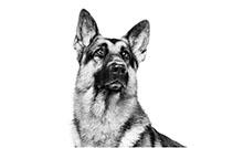 royal canin duitse herder