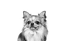 royal canin  ChihuahuaVerwijder