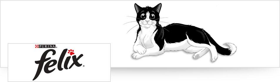 Felix kat