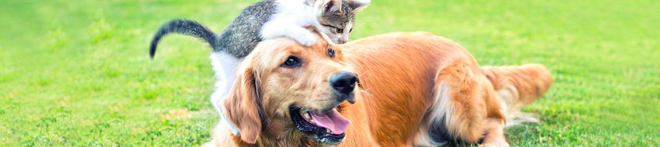 Service hond en kat