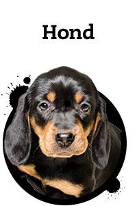 Pet Friday hond