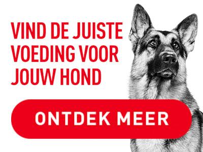Royal Canin Hond