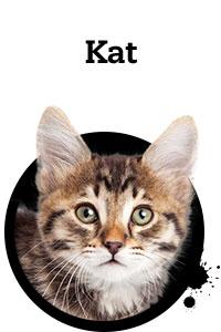 Pet Friday kat