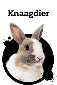 Pet Friday knager