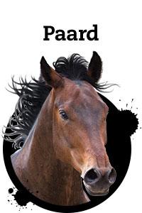 Pet Friday paard