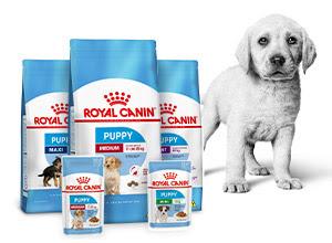 royal canin puppy